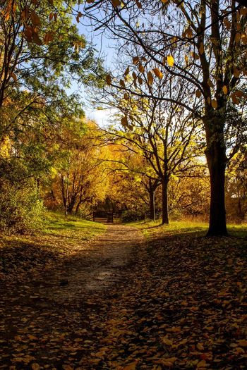 Autumn Colour Tree Plant Nature Tranquility No People Beauty In Nature Sky Sunlight Tranquil Scene Growth Scenics - Nature Autumn Land Field Park Day Branch Sunset Outdoors Change