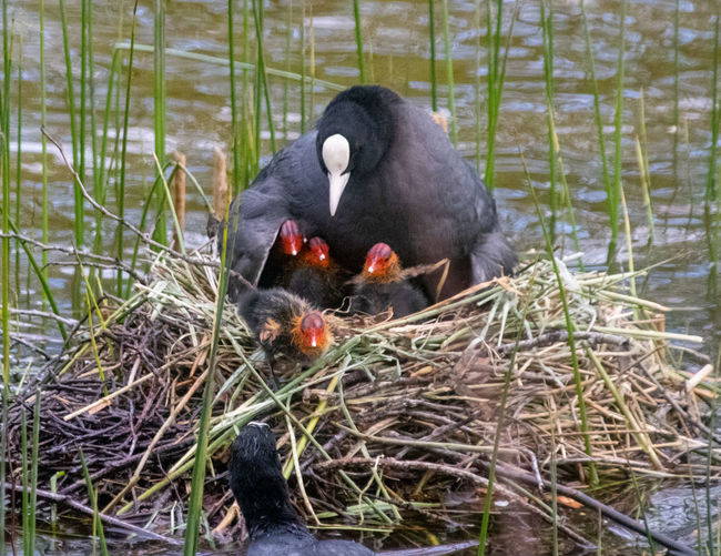 View of bird eating in nest