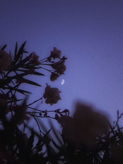 Plant Growth Sky Beauty In Nature No People Nature Flowering Plant Tree Flower Freshness Low Angle View Selective Focus Dusk Close-up Tranquility Vulnerability  Silhouette Fragility Night Copy Space Outdoors Focus