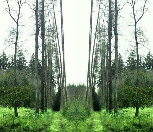 LES Cesta Stromy Naprochazce Forest Trees Path Nas_svet Igerscz