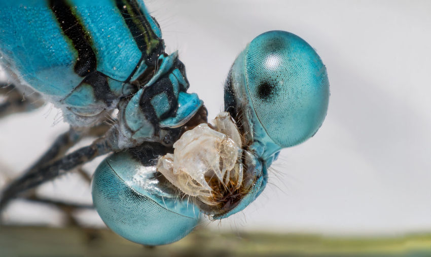 Close-up of damselfly on surface