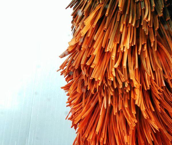 Close-up of orange mop