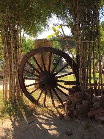 Wheel Tree Wood - Material Wagon Wheel Nature No People Outdoors Day