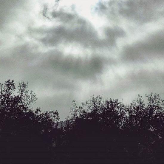 . ☁ . . Trees Clouds Cloudy Cloudscape Nuvole Nuvoloso Marche Italia Liveloveitaly Just_best_photo Foto_naturel NaturalBeauty Naturelover Instanature Fall Fallcolors Leaves Autumn Igersitalia Igersmarche Igerseurope Ig_europe IGDaily Sky SkyClouds skylovers cloudslovers landscapelovers landscape
