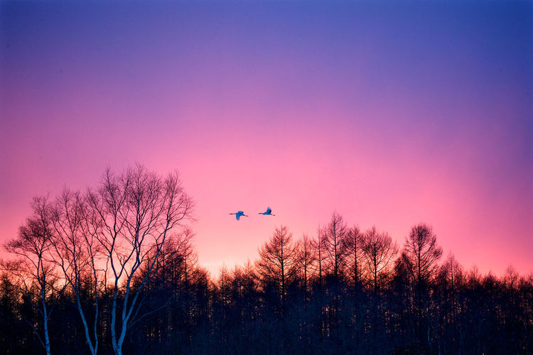 Birds flying against dramatic sky during sunset