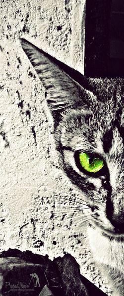 Pets Pet Killerinstinct Pooch Deadlyeyes