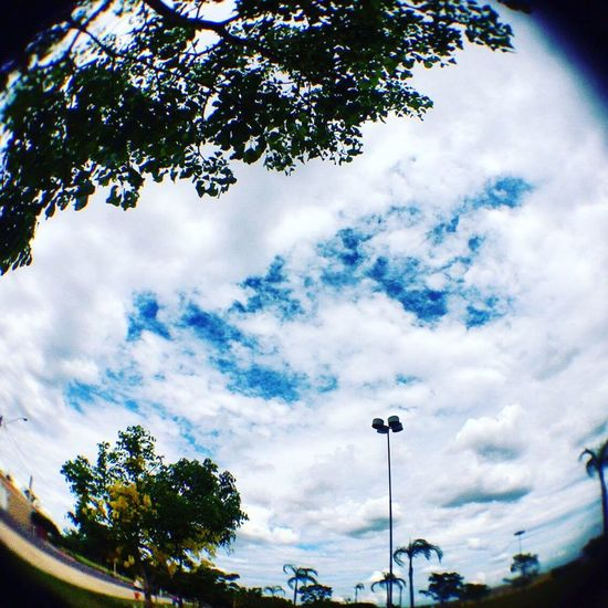 Sky Cloud - Sky Tree No People Day Nature Beauty In Nature Fish-eye Lens Tranquility Blue Sunlight