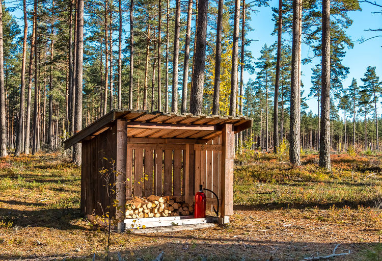 Firewood and fire extinguisher in the middle of the forest in sweden in summer