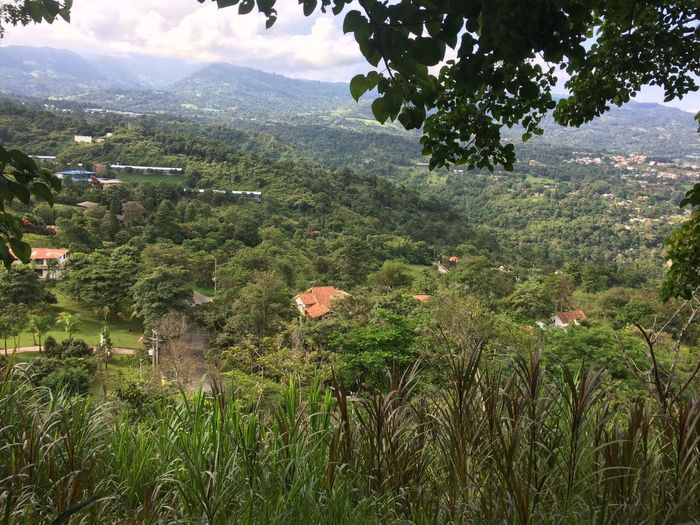 Cordillera Plant Growth Beauty In Nature Nature Tree Green Color Day