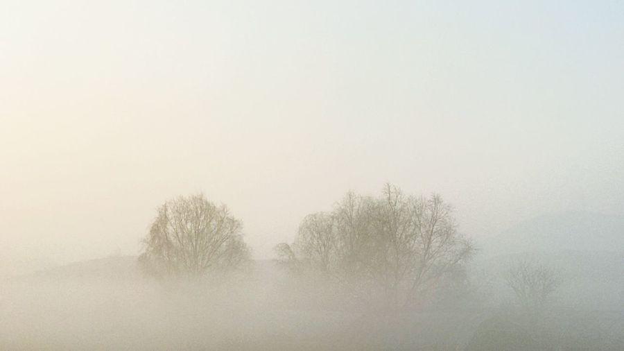 안개낀 아침 Nature Morning Morning Light Smog Landscape Bare Tree Tree Clear Sky Leechangwon Iphonephotography Beauty In Nature