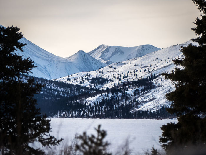 framed mountain range Beauty In Nature Canada Clearing Cold Temperature Contrast Contrasts Day Focus On Background Forest Frame Landscape Mountain Mountain Range Nature No People Outdoors Scenics Snow Tree Wilderness Winter Yukon