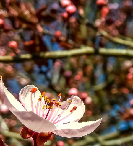 Flower Fragility Close-up Focus On Foreground Nature Growth Beauty In Nature Plant Freshness No People Flower Head Outdoors Day