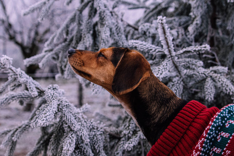 Close-up of dog looking at snow