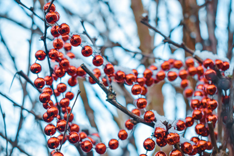 Low angle view of glass beads on tree