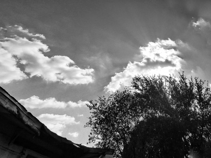 Outdoors Tree Nature Cloud - Sky Freshness Atmospheric Mood Happiness My Cloud Obsession☁️ Cloud_collection  Beauty In Nature Black And White Nature Black And White Photogaphy
