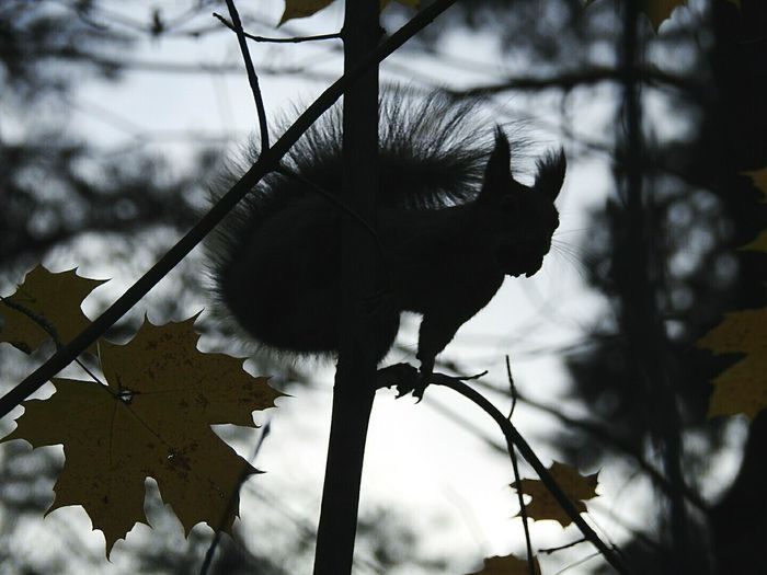 Squirrel One Animal Nature Tree Beauty In Nature Animal Themes Rainy Days☔ Autumn🍁🍁🍁 Colors Of Sankt-Peterburg TakeoverContrast Monochrome Photography Beauty In Nature Sankt-Petersburg Park Russia