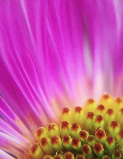💗 Flower