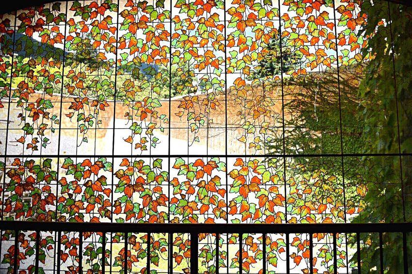 ステンドグラス風 動物園 28mm 28mmの世界 多重 葉っぱ Japan Photography 夏の日 写真で伝えたい 光 緑 EyeEm Best Shots EyeEm Japan Colorful 心象写真 Plant Beauty In Nature EyeEm Nature Lover 日差し グリーン Light To Come In