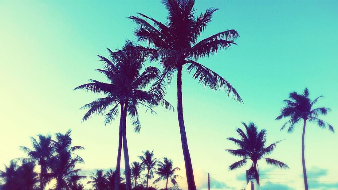 Palm Trees Island Life