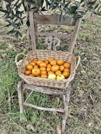 Taking Photos Enjoying Life Tree Trees Chair Chairs Chairswithstories Siciliabedda Sicily Sicilia Mandarin Naturelovers Nature_collection Nature Photography Nature Atmosphere Enjoying Life Relaxing Creativity Hello World Eating In Sicily My Elios Garden