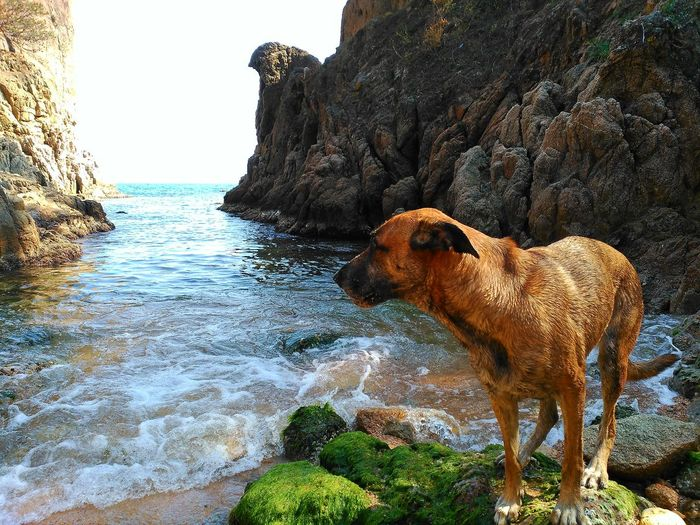 Beach Beachphotography Beach Life Costa Brava Nature Plant Tree Destination Destinations Dogs Dogslife Animal Animals Pet Portraits Pets Canine Water Nature Day Animal Themes Mammal No People Outdoors Domestic Animals Sea Beauty In Nature Sky The Great Outdoors - 2018 EyeEm Awards