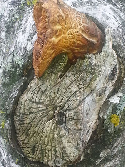 Nature Is Beautiful Hugging A Tree Textures And Surfaces Up Close Tree Trunk Tree Mushroom Wood Grain No People Nature Outdoors