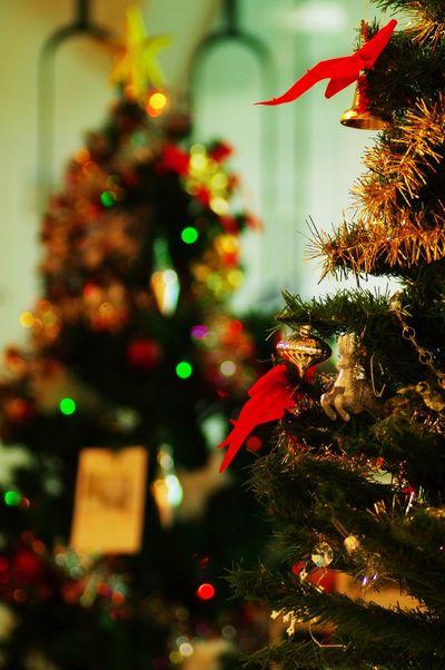 Christmas Tree X'mas