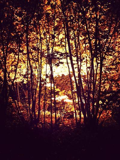 Autumn Collection Sun_collection Landscape_Collection Colors Of Autumn