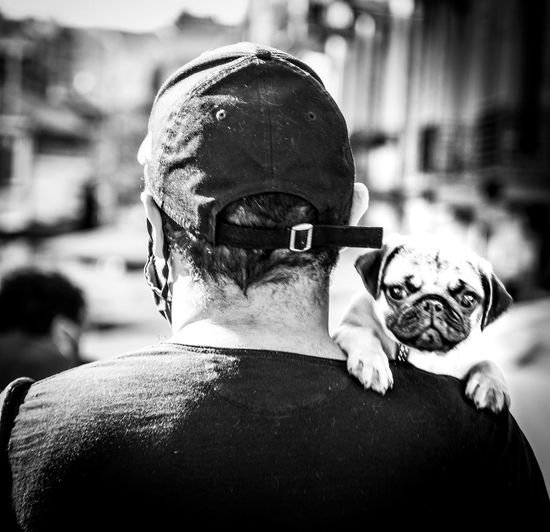 Rear view of man with dog