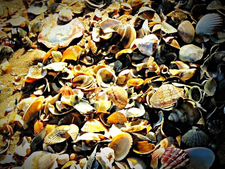 Beauty In Nature Seashells Outdoors Beach Photography Nature