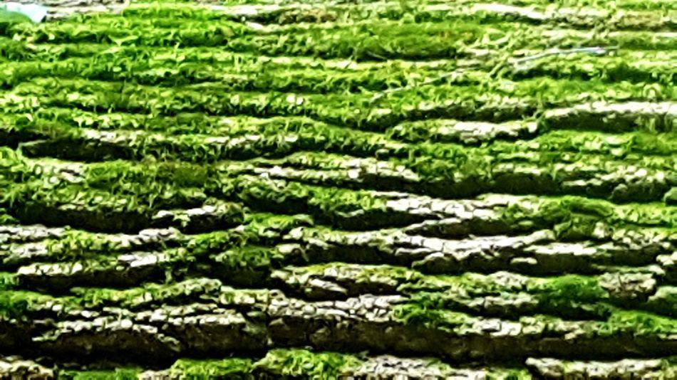 Trunk Texture Green Lush Foliage Grass Green Color