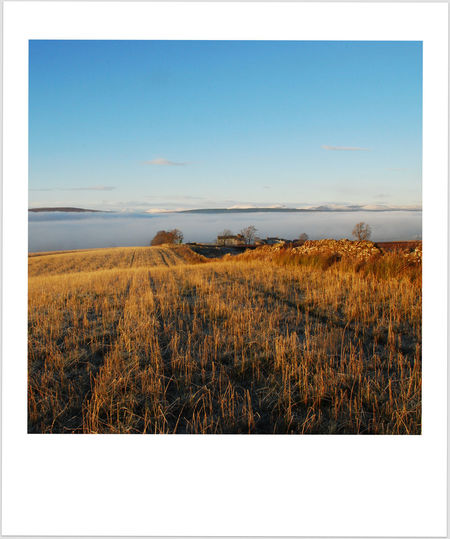 Agriculture Beauty In Nature Blue Sky Clear Sky Cold Temperature Cut Wheat Patterns Day Field Fog In Glen Grass Growth Landscape Nature No People Outdoors Plant Scenics Scotland Wild Landscape Sky Tranquility Wheat