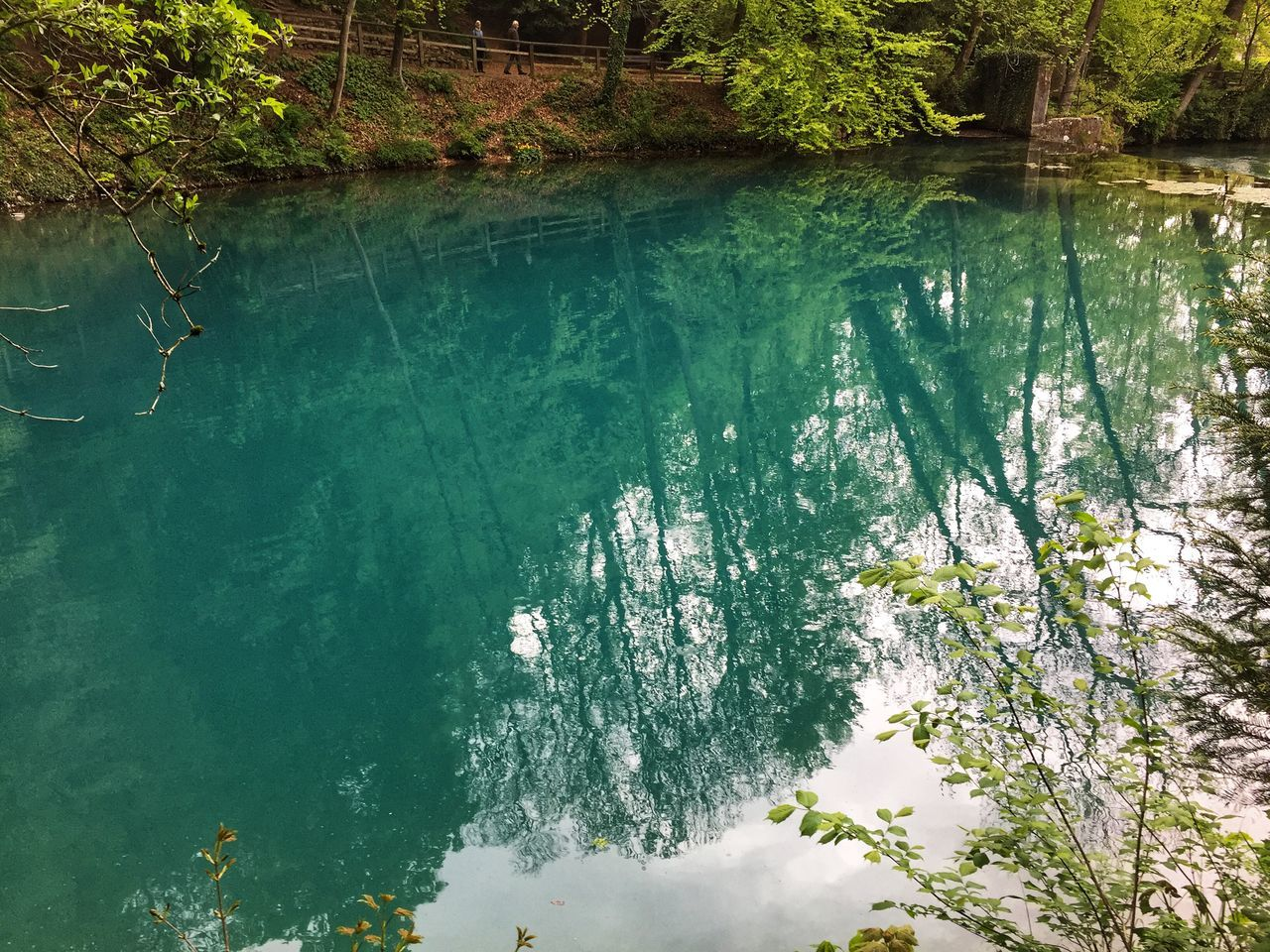 water, tree, plant, beauty in nature, nature, day, tranquility, scenics - nature, reflection, no people, lake, tranquil scene, high angle view, waterfront, outdoors, green color, non-urban scene, growth, turquoise colored, marine