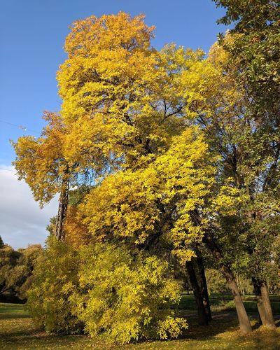 City Park Fall