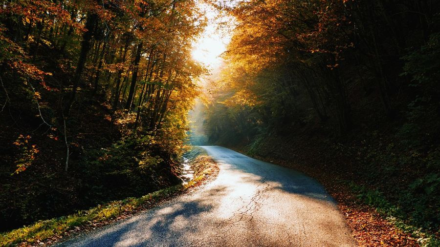 Forest Forest Photography Woods Trees Fall Fall Beauty Fall Colors Autumn colors Autumn Leaves Road Empty Road EyeEm Best Shots EyeEmNewHere EyeEm Nature Lover Landscape_Collection Landscape_photography Tree Forest Sunlight Sky Shining Sunbeam Sun Calm Orange Color Solar Flare Capture Tomorrow