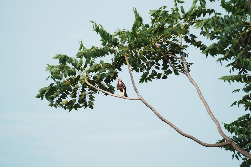 Branch Nature Clear Sky Horizontal Tree Sky Fruit Outdoors Low Angle View No People Landscape Close-up Beauty In Nature Day Egle Bird Eyem Nature Lover Nature Standing Bird