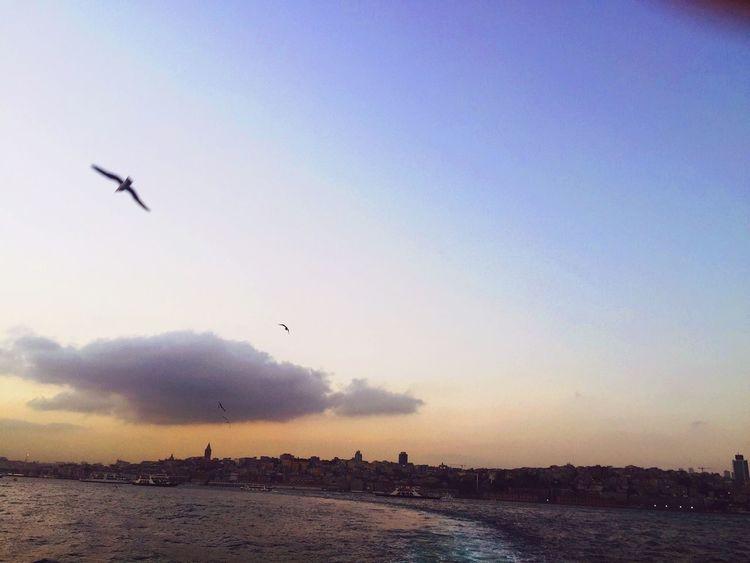 Skyporn Skyandclouds  IPhoneography Birds Sail Away, Sail Away Iphonephotography