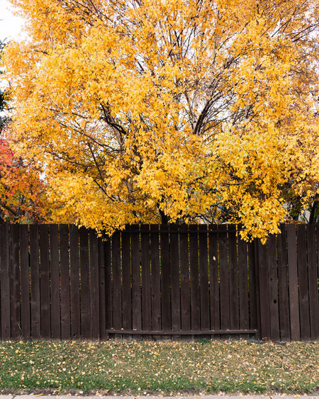 Yellow flowering plants by fence during autumn