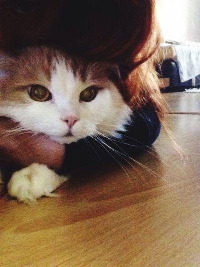 Eyes Cat Pets One Animal OpenEdit Taking Photos Hello World Beauty