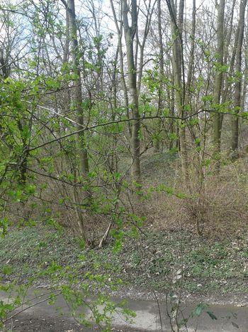 Urban Spring Fever Unterwegsunddraußen Nature On Your Doorstep In Germany Nordrhein-Westfalen From My Point Of View