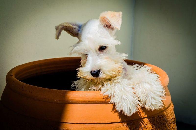 Dog Puppy Love Taking Photos Ramyolickel My Favorite Photo Pindamonhangaba Pet