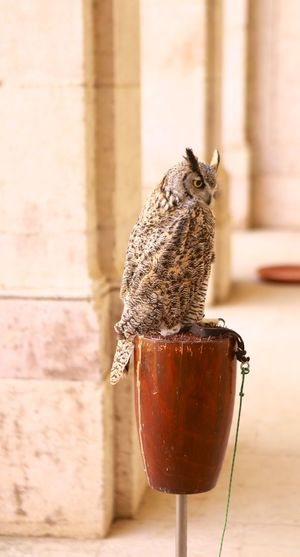 Owl in profile EyeEm Selects Animal Themes One Animal No People Animals In The Wild Bird Focus On Foreground Perching Day