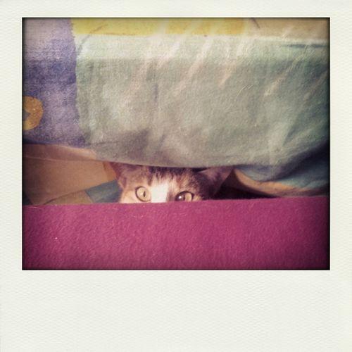 Cat Hi!