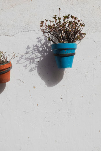 Potted plant on white wall