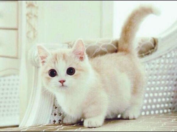 Cat رمزياتBBM صور_رمزية رمزيات_منوعه رمزياتي Photo♡ صور رمزيات  First Eyeem Photo Photo