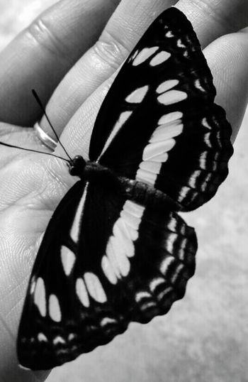 Hi! Hello World Taking Photos Relaxing Buuterflynd Me Butterfly ❤ Blackandwhite Photography Butterfly Collection
