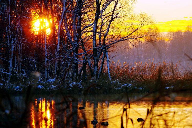 Winter Landscape Birds Lake Light Relaxing Moments Poetry Masuren Tree Sunset Water Sunlight Cold Temperature Sun Sky Close-up