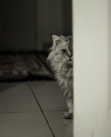 ©TheDucci #le_me Grain Sneaking Pets Domestic Cat Indoors