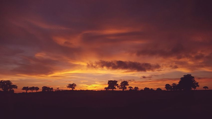 Sunset Dramatic Sky Silhouette Tree Beauty In Nature Nature is the greatest artist