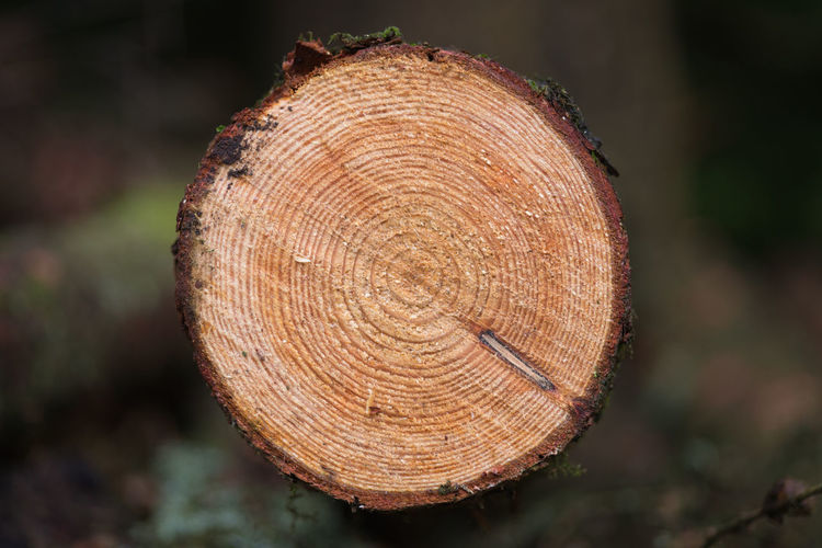 Tree Tree Ring Forest Close-up Focus On Foreground Timber Log Wood Nature Plant Wood - Material Textured  Day Deforestation Shape Geometric Shape Tree Stump Circle Bark Cross Section No People Outdoors Wood Grain Autumn